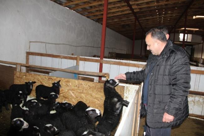 İl Tarım Ve Orman Müdürü Romanov Koyun Çiftliğini Ziyaret Etti