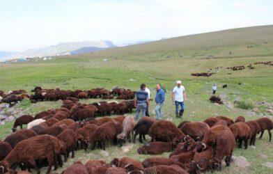 İl Tarım Müdürlüğü Heyetinden Köy Ve Meralarda Üretici Ziyareti