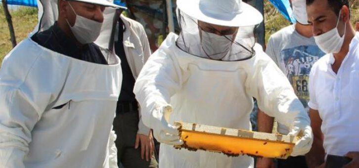 Organik Arıcılık Desteklenmesine Başlandı