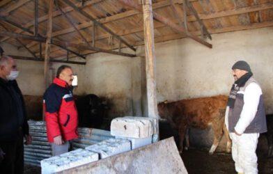 Tacirli Köyündeki Hayvancılık İşletmeleri Ziyaret Edildi